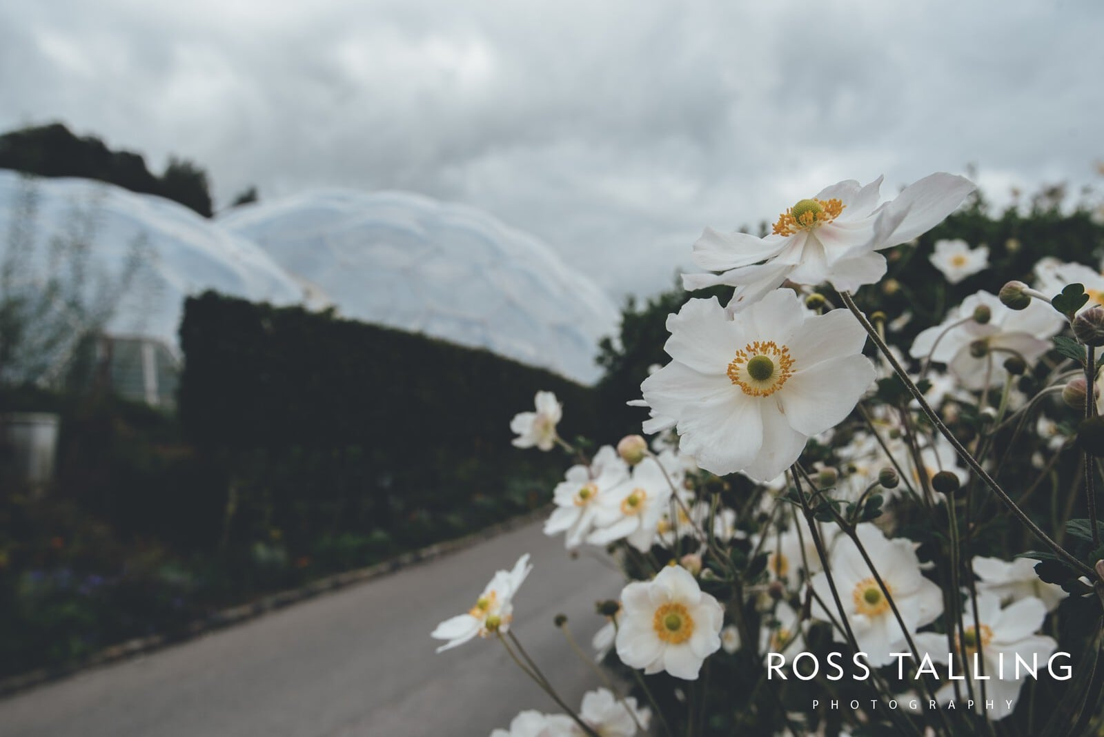 Eden Project Wedding Photography_0016