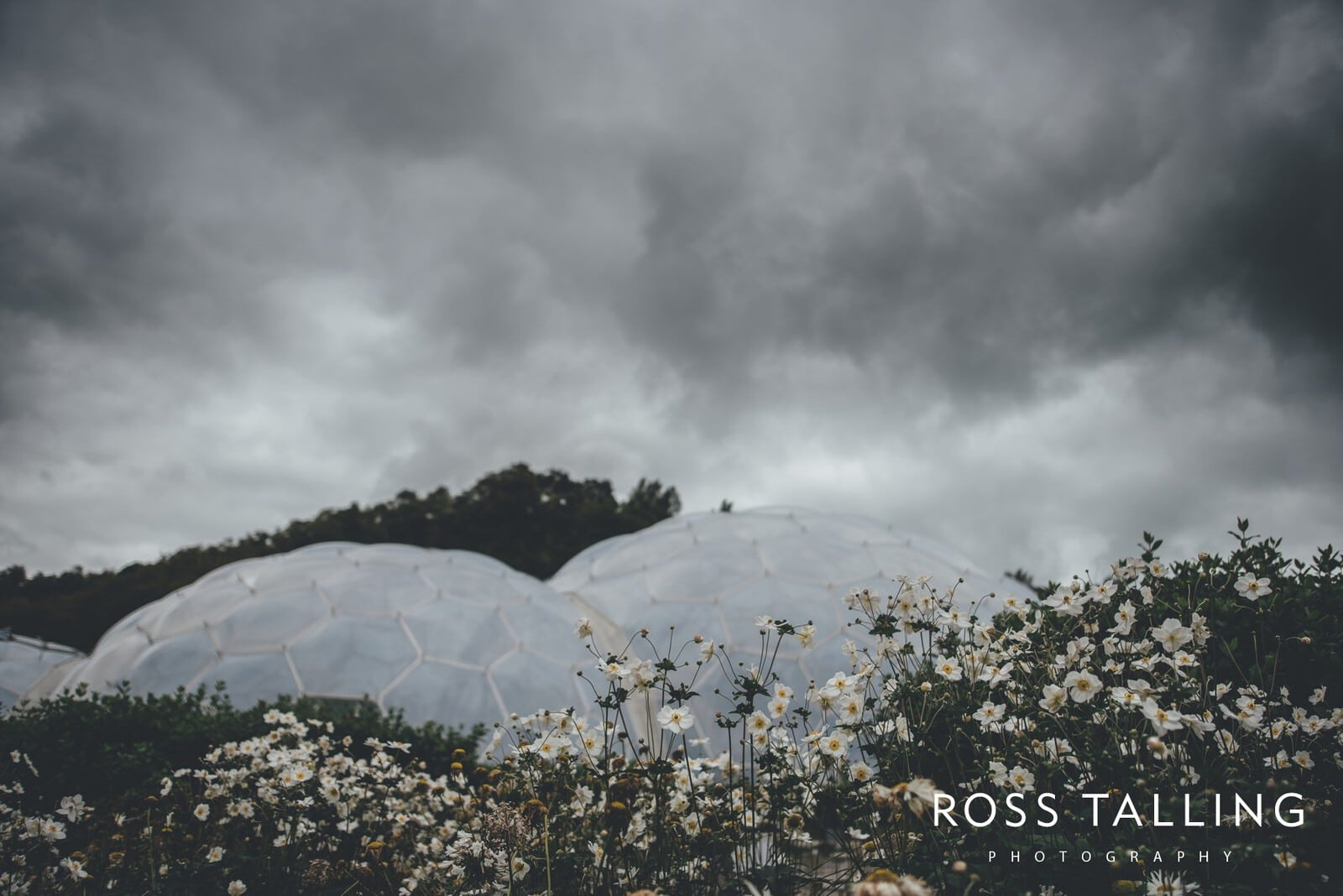 Eden Project Wedding Photography_0001